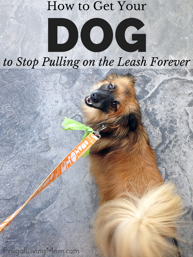 How-to-Get-Your-Dog-to-Stop-Pulling-on-the-Leash