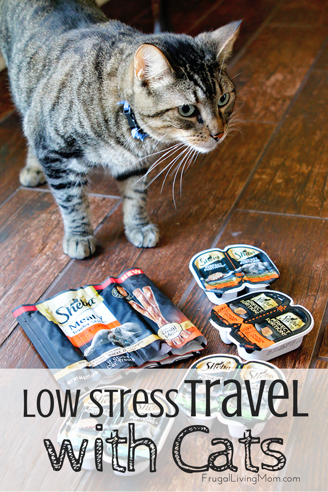 How-To-Travel-with-My-Cat